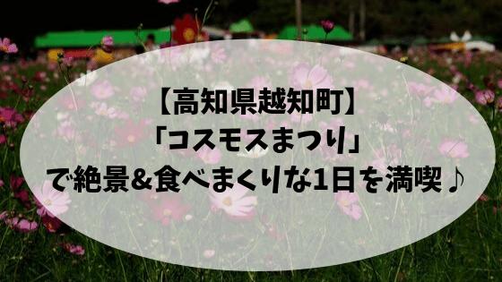 高知県越知町コスモスまつり