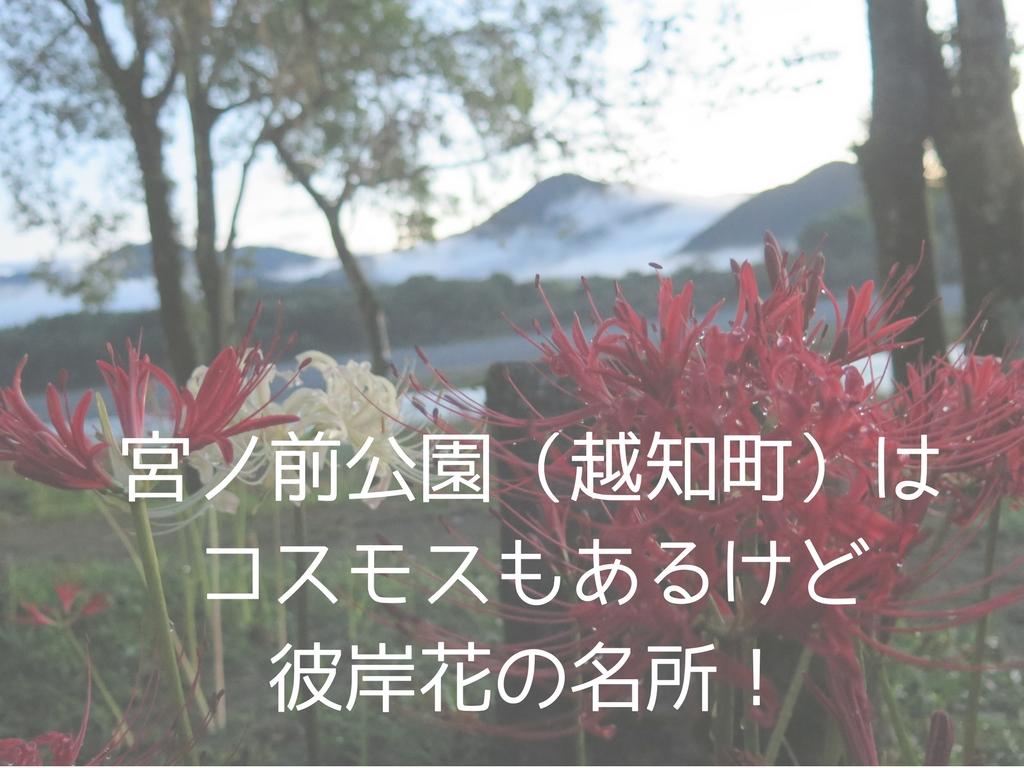 宮ノ前公園(越知町)はコスモスもあるけど彼岸花の名所!