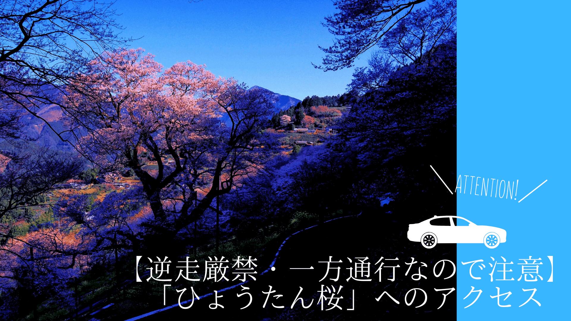 【逆走厳禁・一方通行なので注意】「ひょうたん桜」へのアクセス